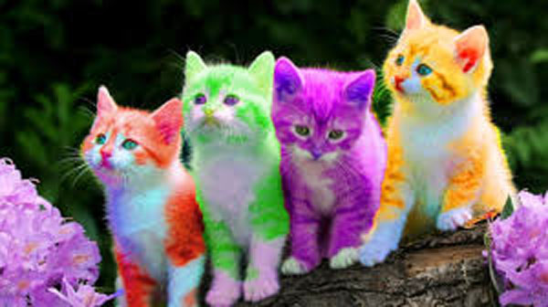 رنگبندی در طراحی سایت